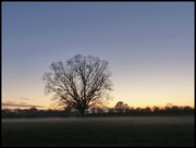 26th Nov 2020 - mist at sunset