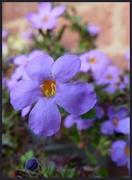 23rd Nov 2020 - second flowering