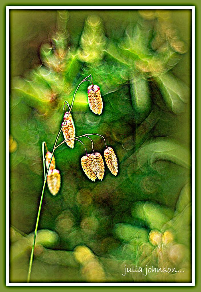Beach Grasses by julzmaioro