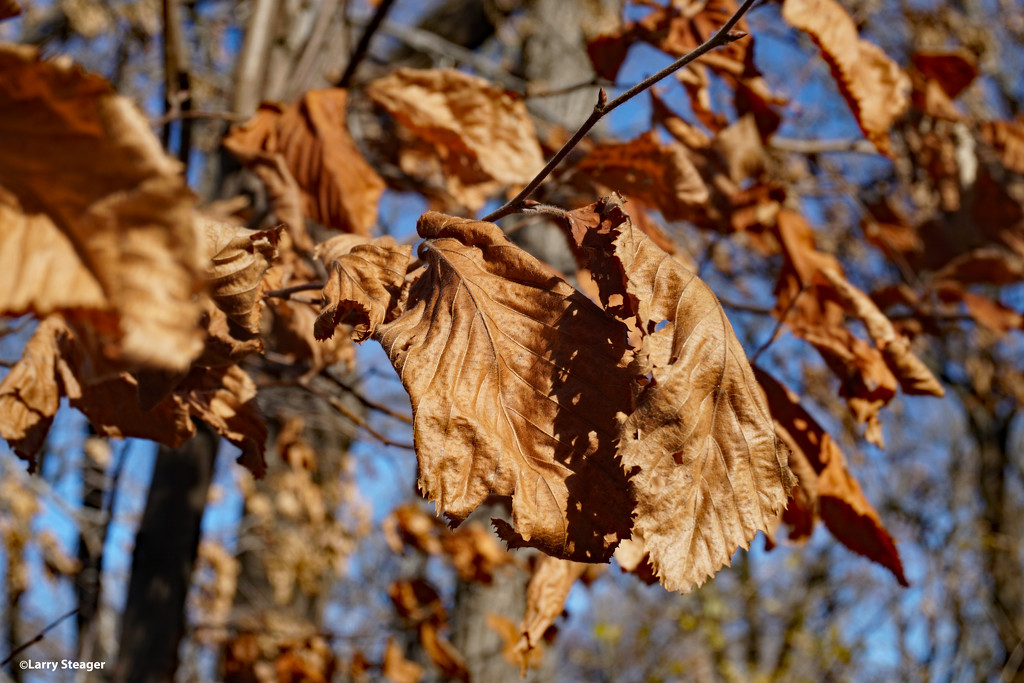 Autumn leaves by larrysphotos