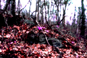 23rd Nov 2020 - Rocks
