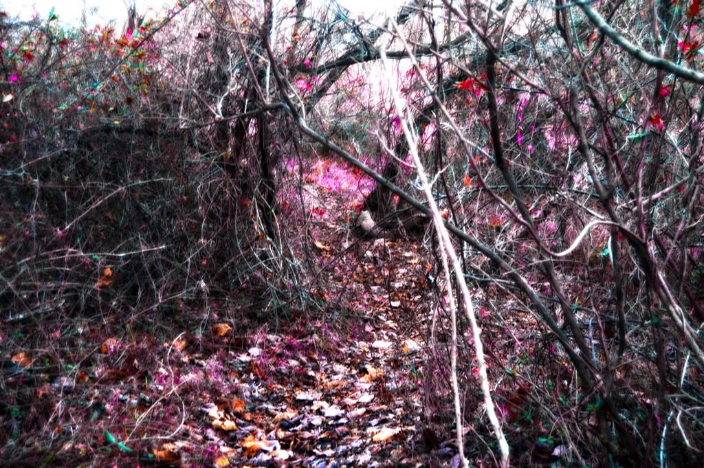 Path by francoise