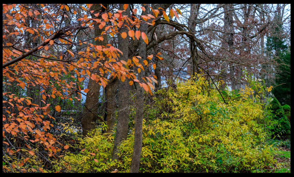 Still Some Colour by hjbenson