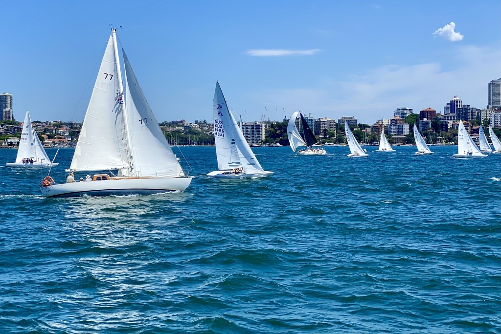 Racing yachts near Manly ferry  by johnfalconer