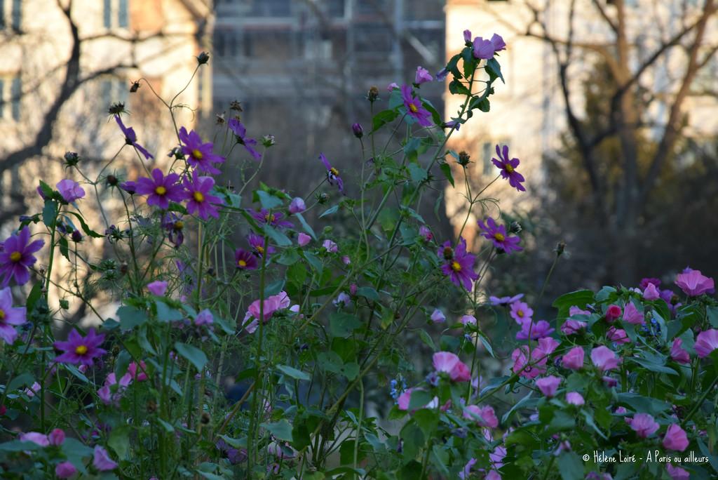 November's flowers by parisouailleurs