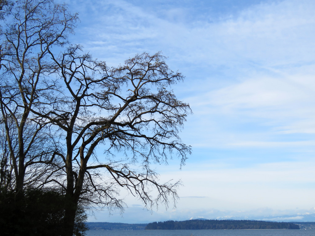 """""""Trees"""" by seattlite"""
