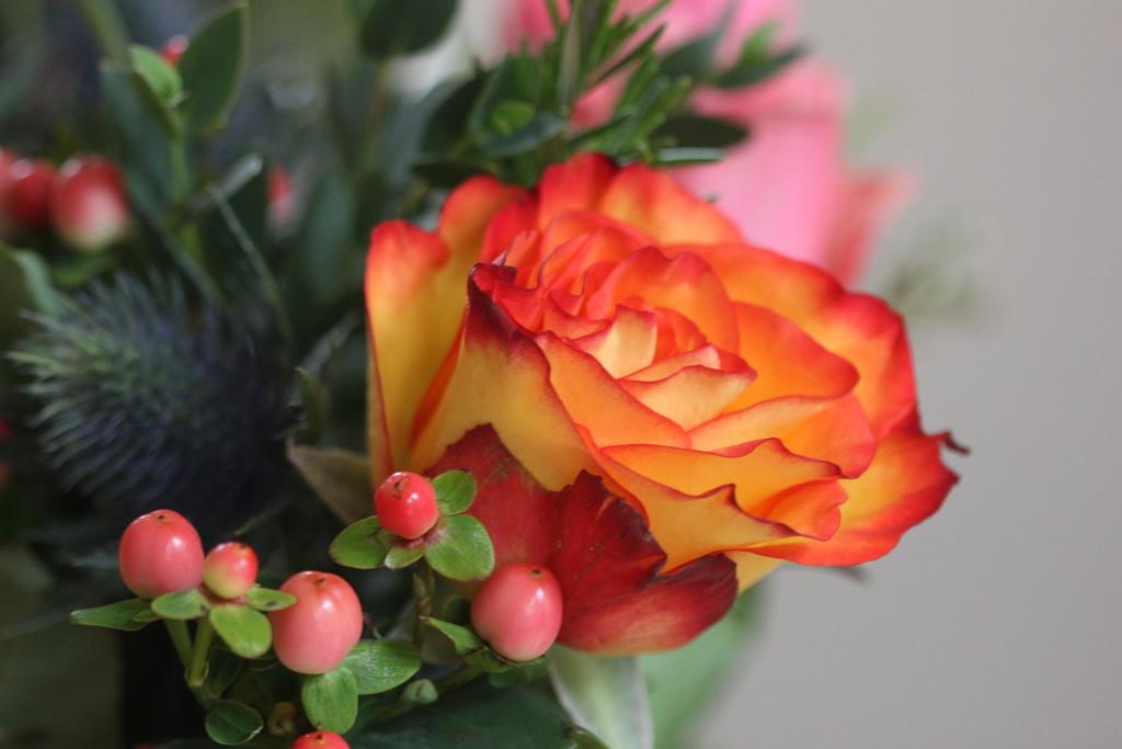 Bloom & Wild by jamibann