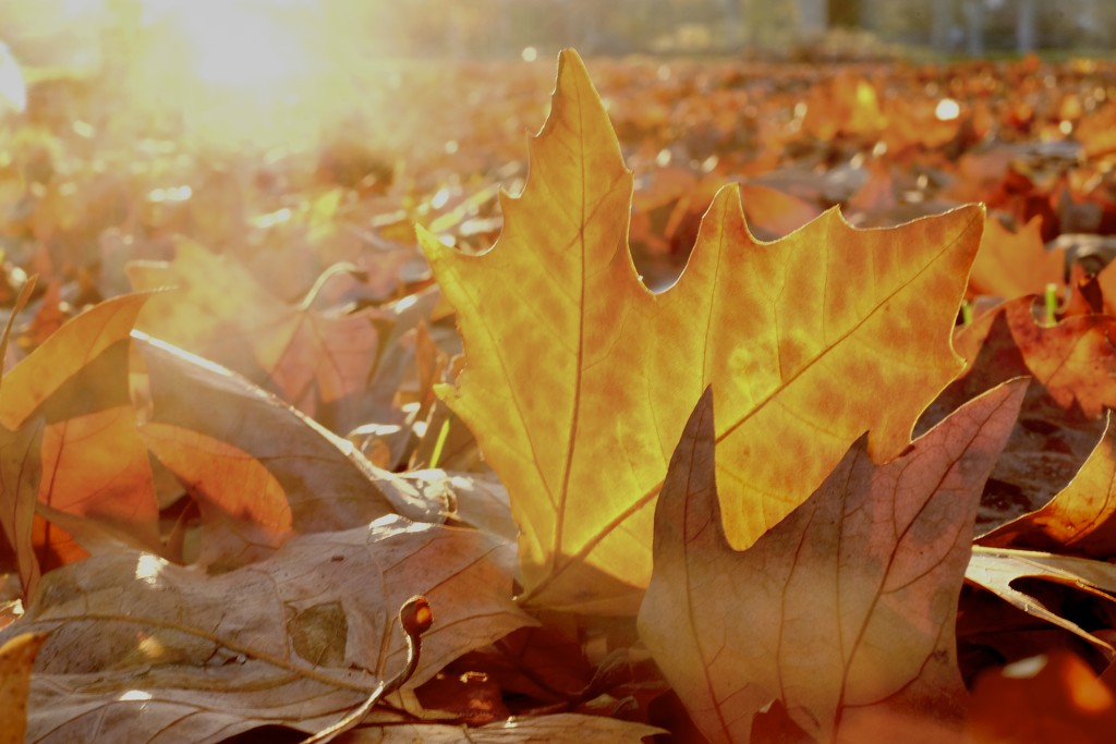 Les feuilles mortes (1) by vincent24