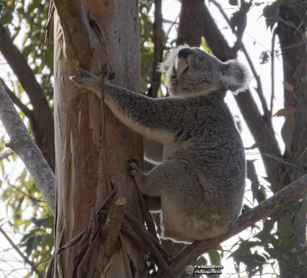 ever upwards by koalagardens