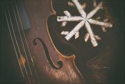 28th Nov 2020 - To the Season of Music