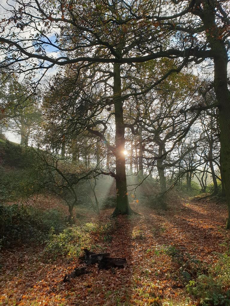 Autumn Woodland by shepherdman
