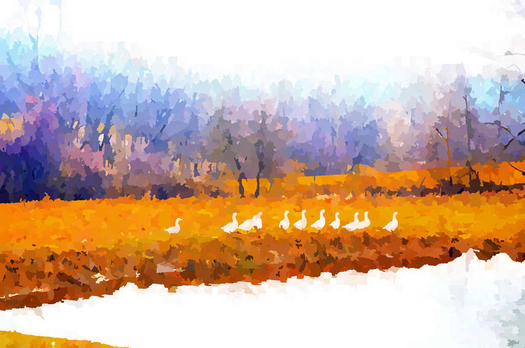 Geese by francoise