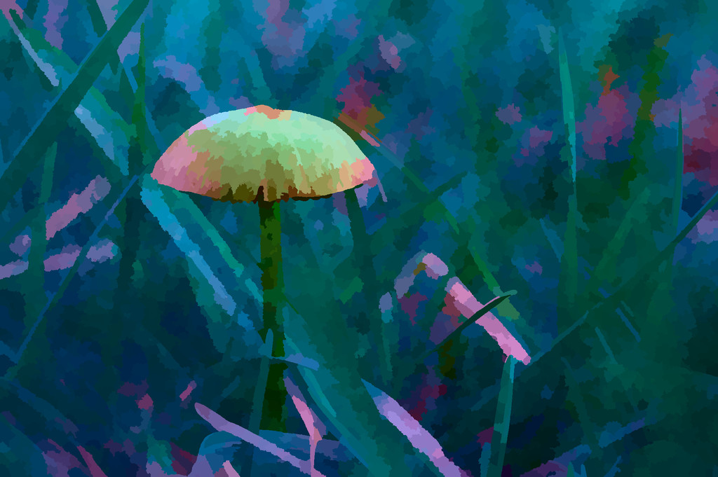 mushroom 2 by francoise