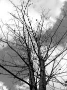 29th Nov 2020 - The maple trees are bare...