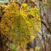 Bug Eaten Leaf!