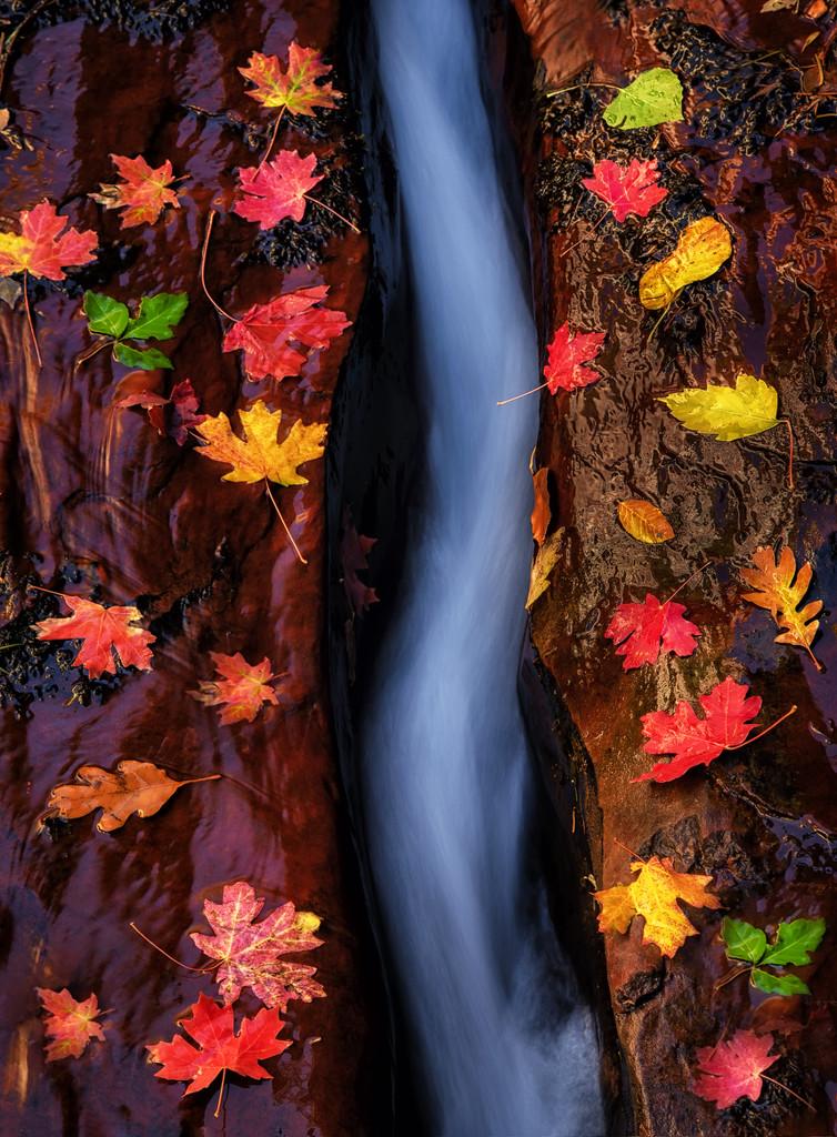 Every Leaf Is A Flower by exposure4u