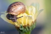 29th Nov 2020 - Snail