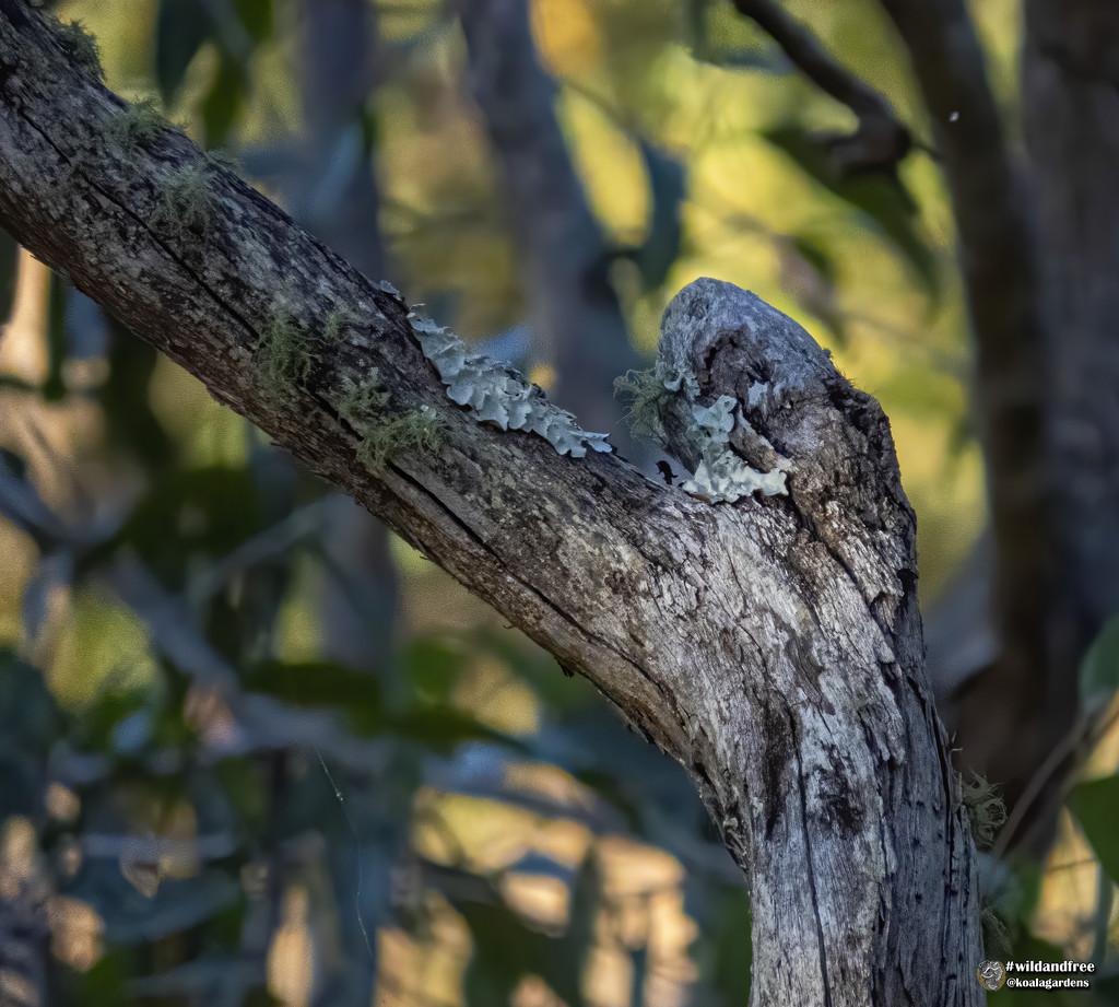 a little lichen by koalagardens