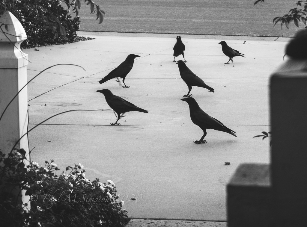 Daily Morning Visitors  by elatedpixie