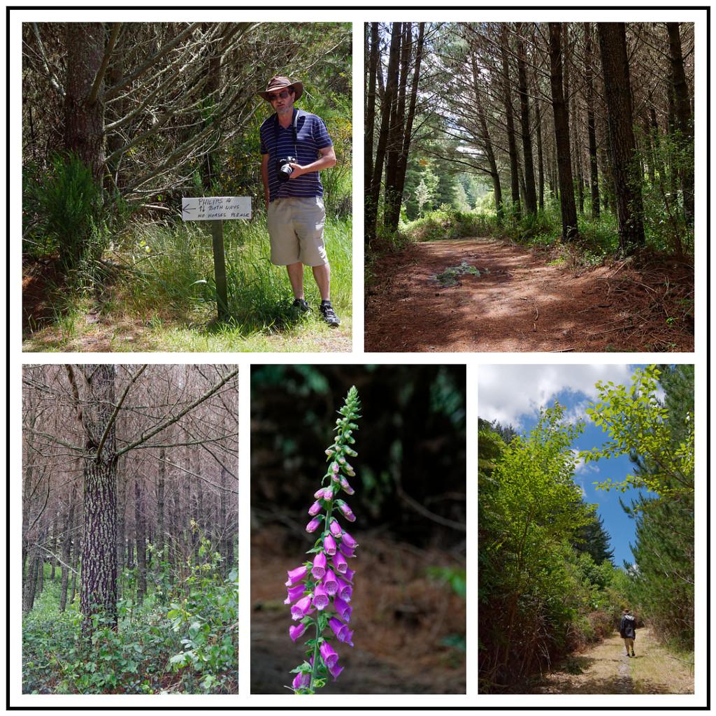 Pine Forest Trail by chikadnz