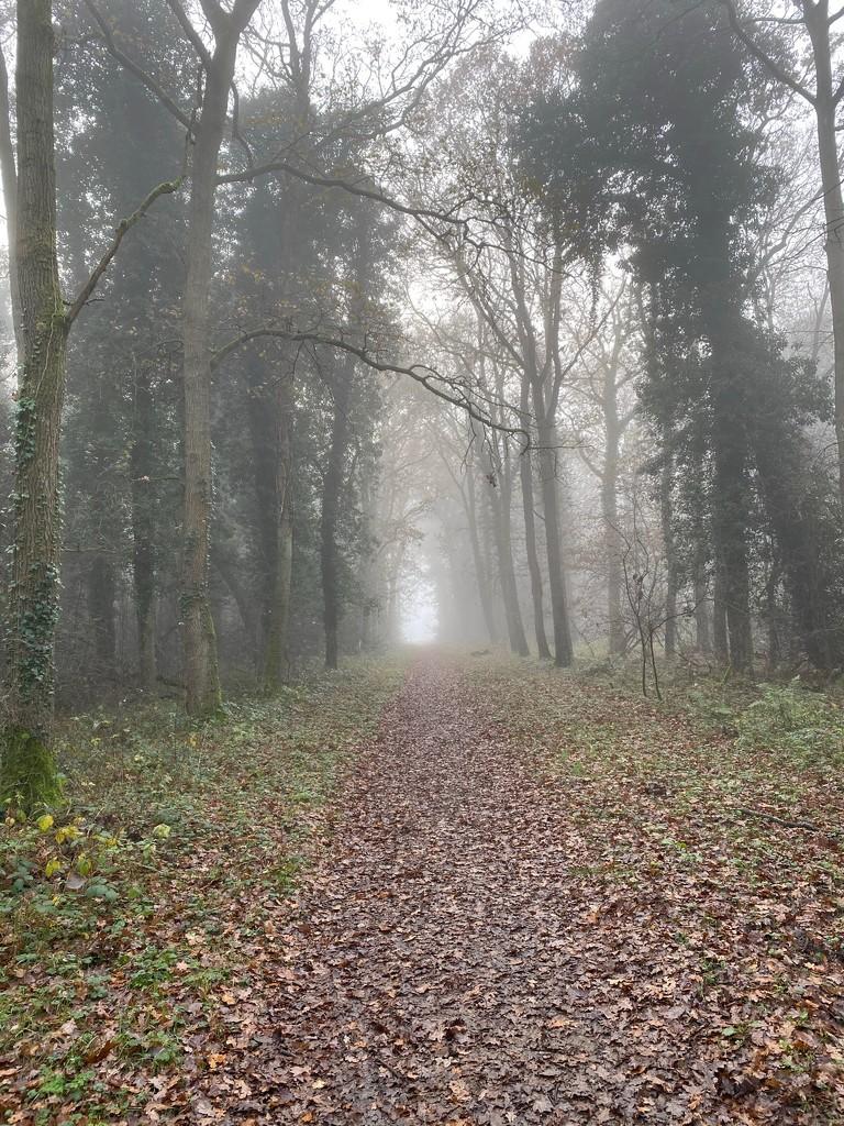 Foggy Walk by gillian1912