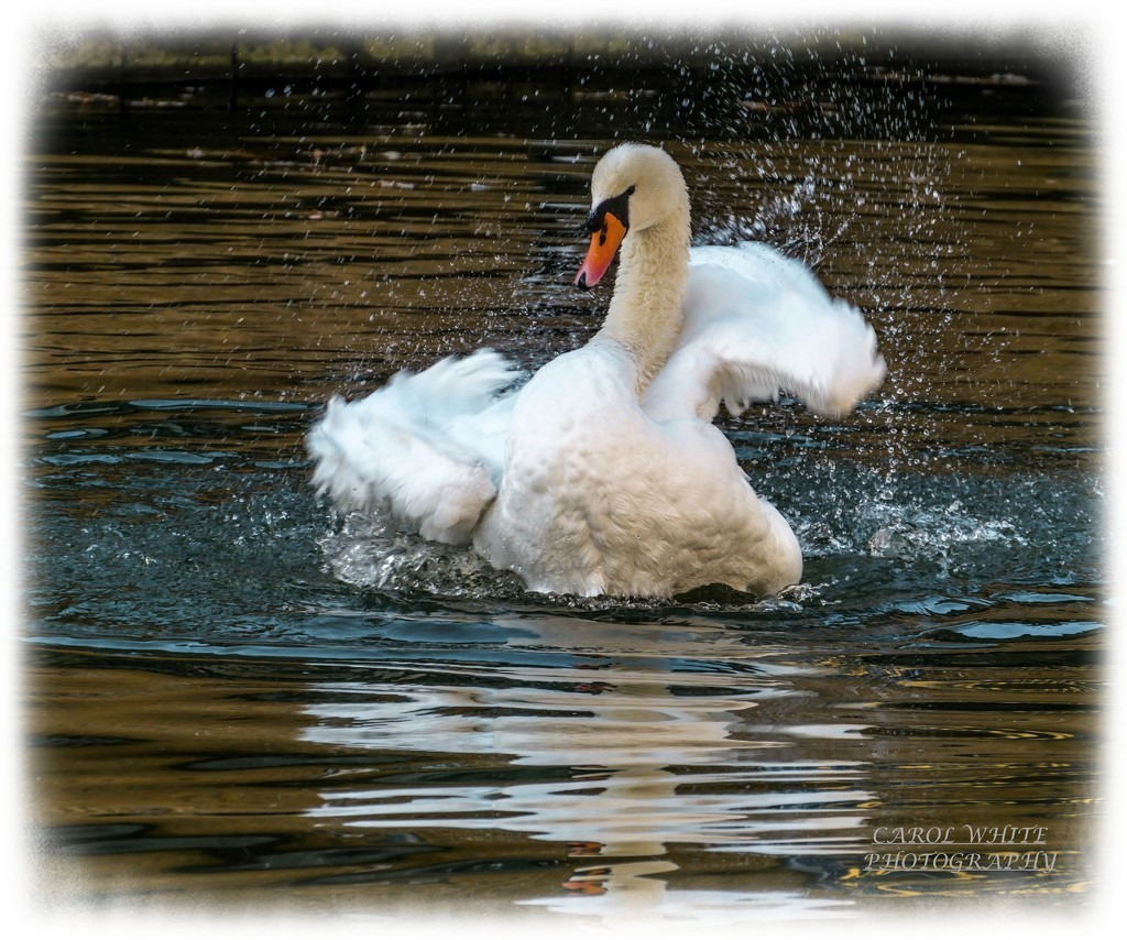 Splish,Splash !!! by carolmw