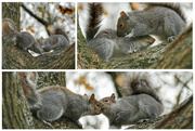28th Nov 2020 - Enjoyed watching these two squirrels playing together - they were oblivious to their audience!