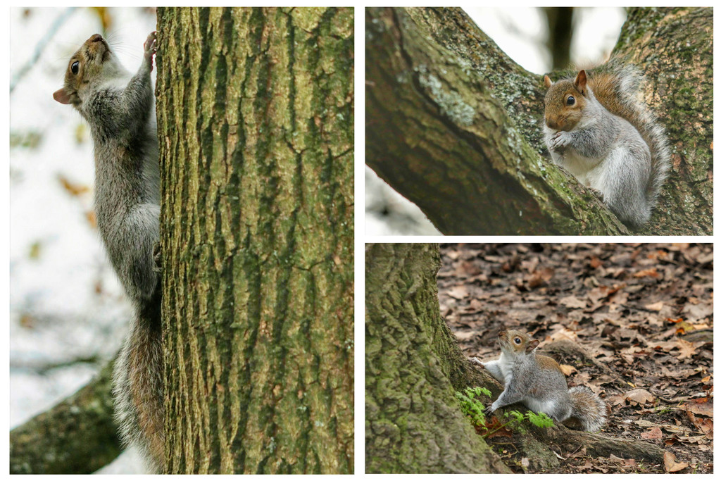 More of the squirrels! by lyndamcg