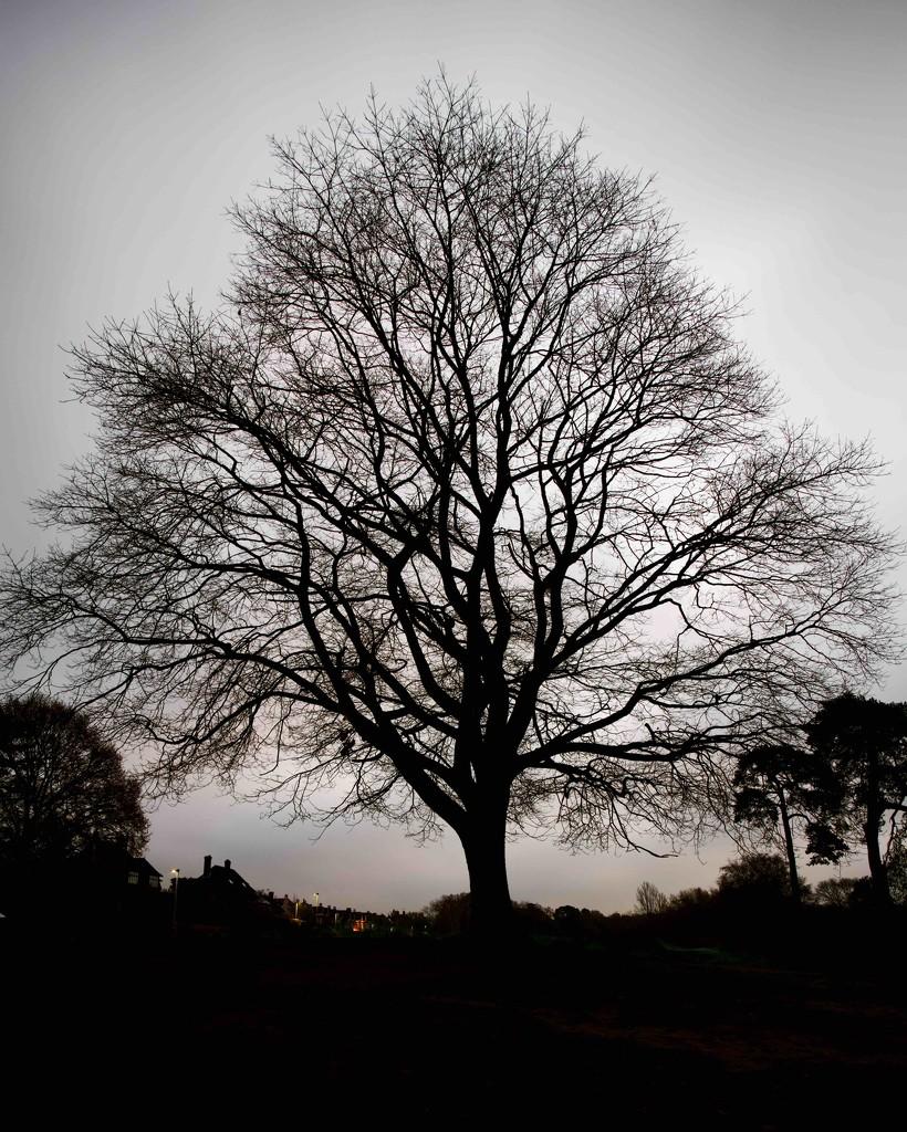 Skeleton tree by moonbi