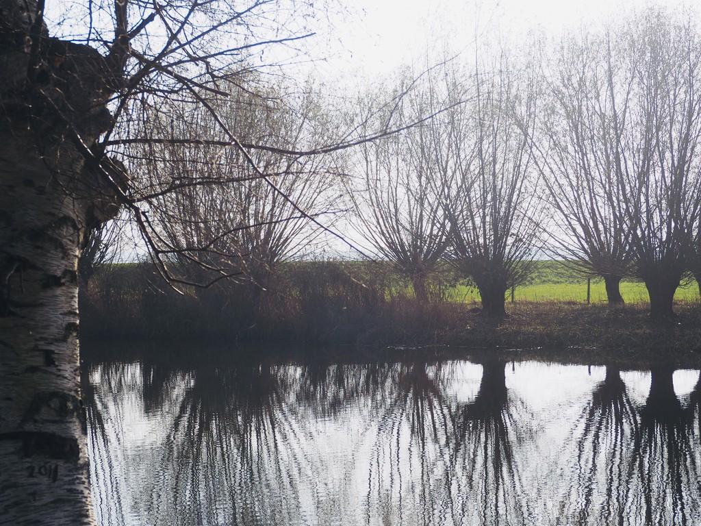 Pollard willows by thedarkroom