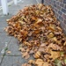 Neatly Raked
