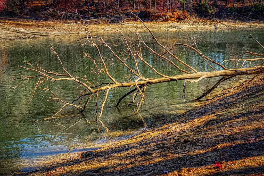 Fallen Tree by k9photo