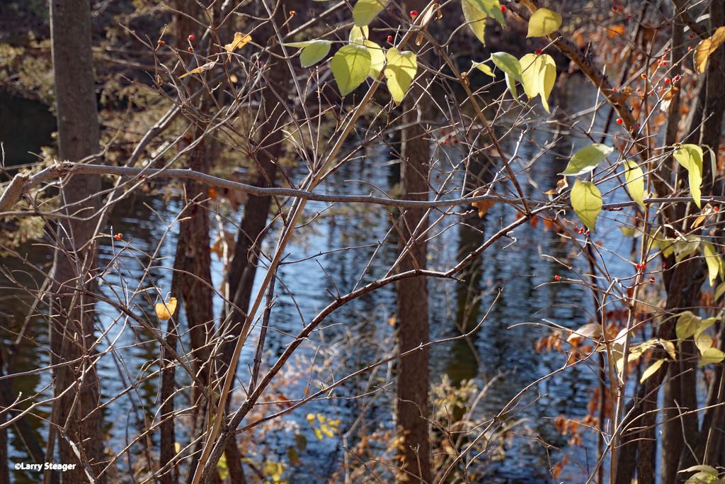 A few green leaves by larrysphotos