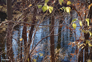 29th Nov 2020 - A few green leaves