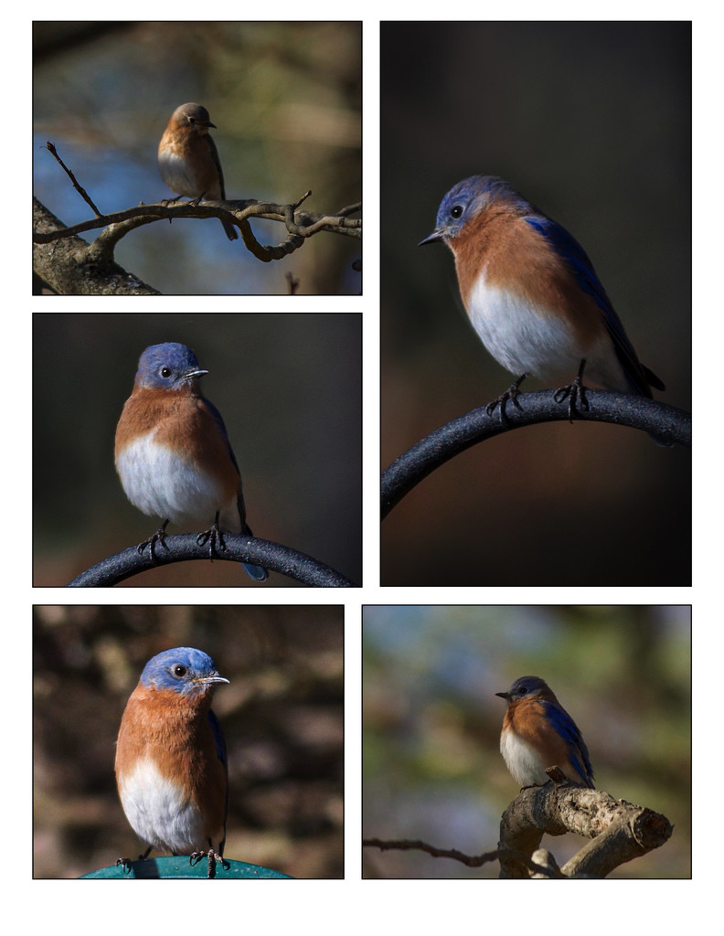 The Bluebirds are back! by berelaxed
