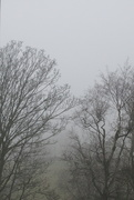 29th Nov 2020 - foggy today