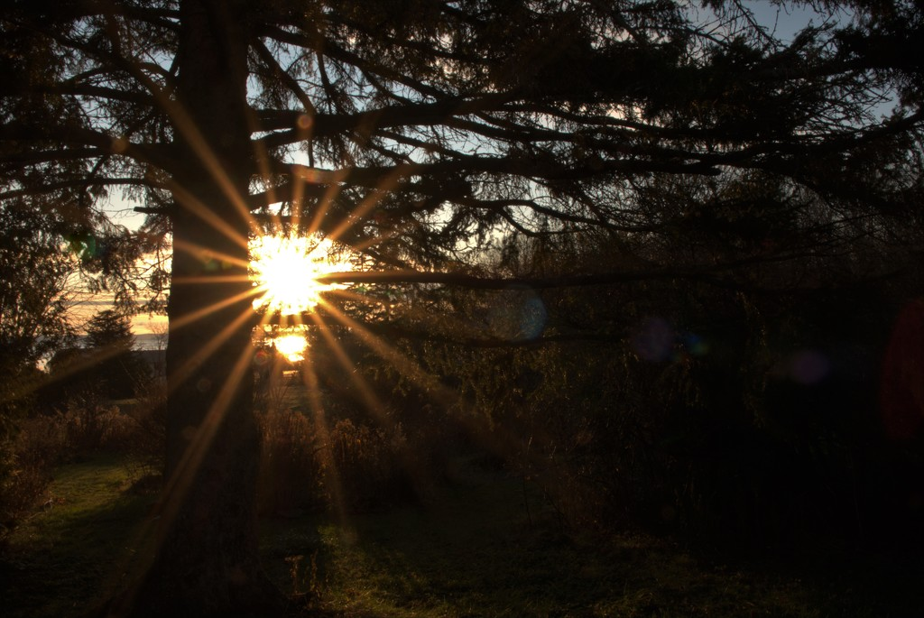 Sunrise through the Trees by radiogirl