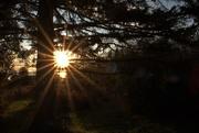 29th Nov 2020 - Sunrise through the Trees