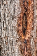 25th Nov 2020 - Tree Trunk