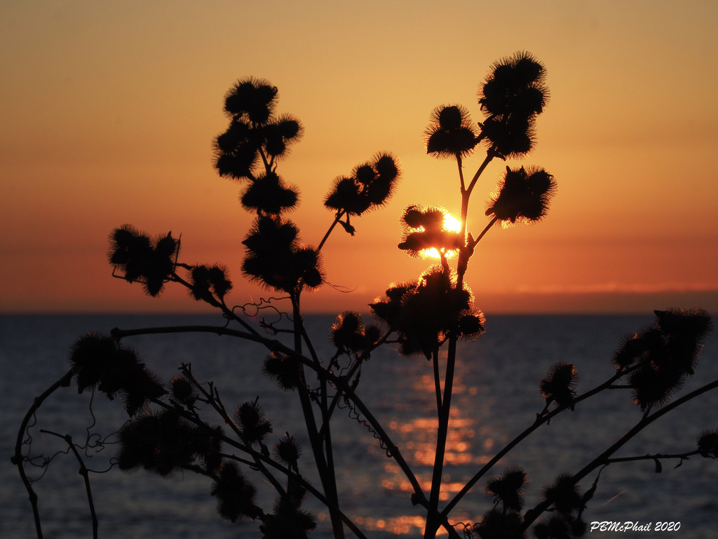 Burrs in Silhouette by selkie