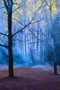 29th Nov 2020 - trees