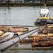 Log Driver, Fraser River