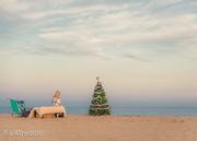 29th Nov 2020 - O Christmas Tree