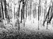 29th Nov 2020 - trees...