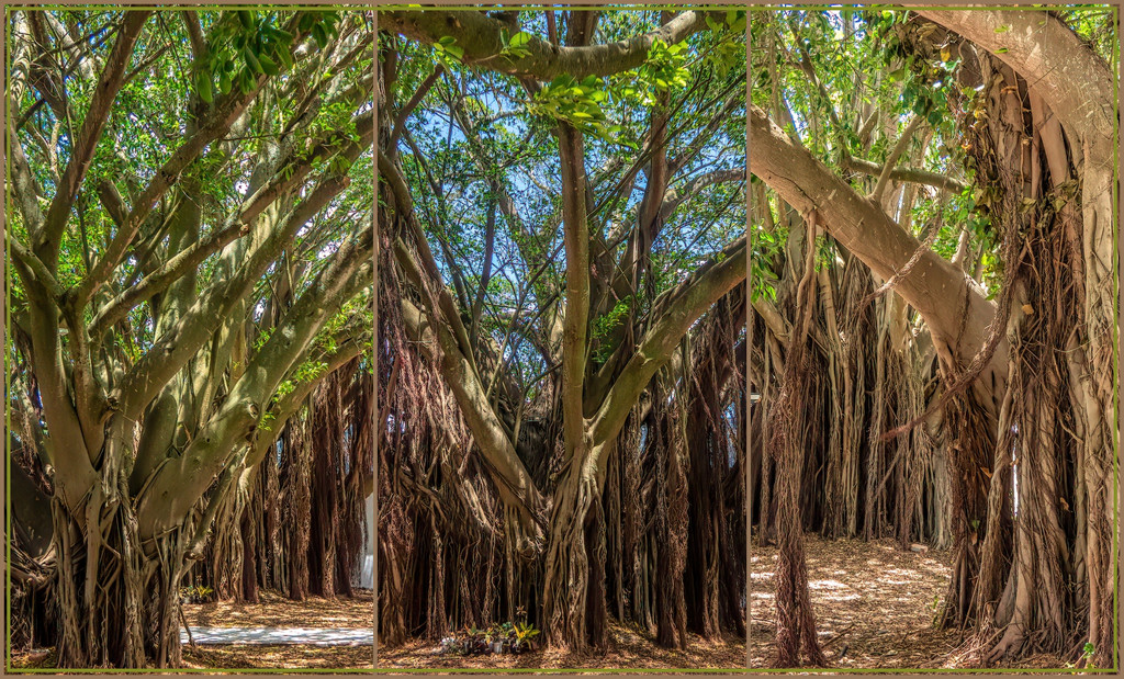 Unusual trees shading the market by ludwigsdiana