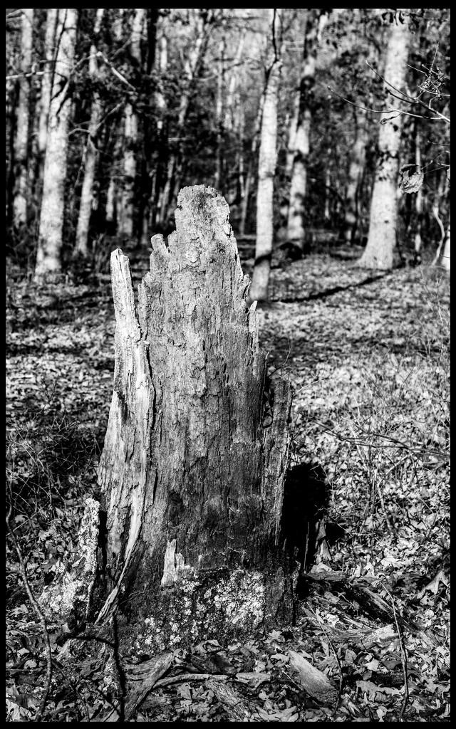 Old Stump by hjbenson