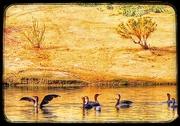 29th Nov 2020 - Double-Crested Cormorants