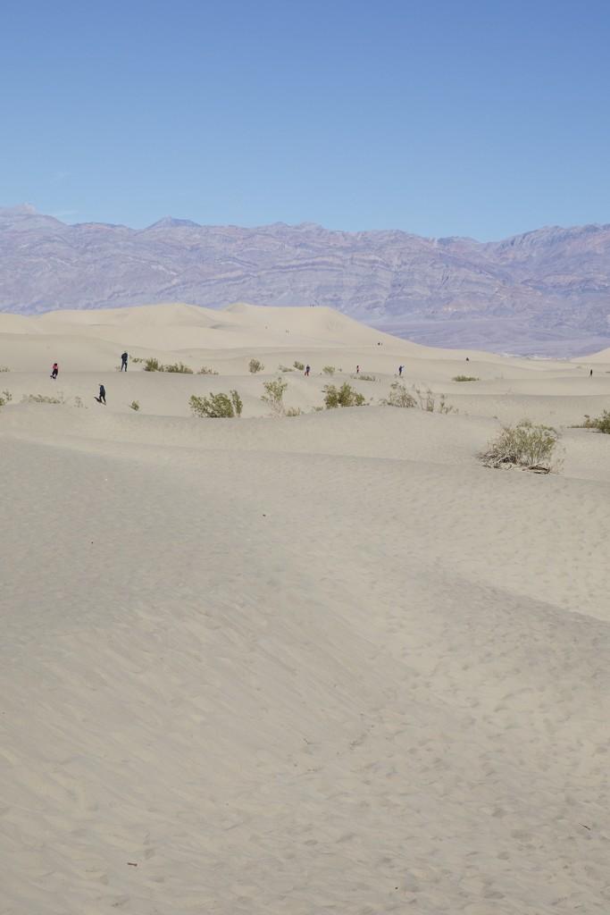 Dunes by gapandgain