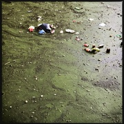 30th Nov 2020 - Litter