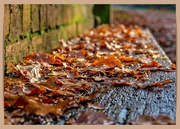 30th Nov 2020 - Fallen Leaves